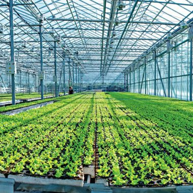 agricultural-complexes-11