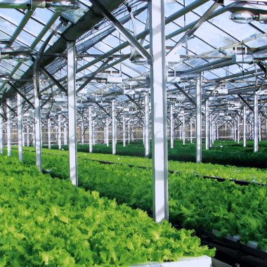 agricultural-complexes-12