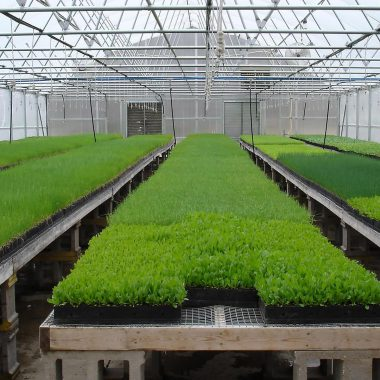 agricultural-complexes-23